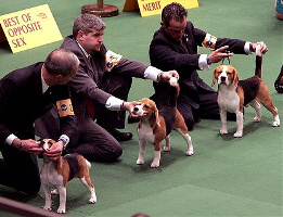 Dog Training Classes Melbourne Florida